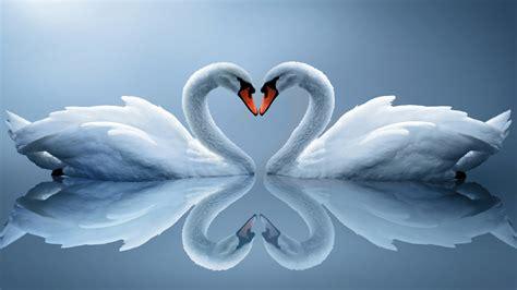 Twin Flame Soul Mates Symbol