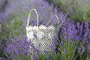 Lavendel Sorten übersicht : lavendel im garten kennen sie diese 3 beliebten sorten ~ Eleganceandgraceweddings.com Haus und Dekorationen