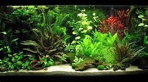 Aquarium Einrichten Beispiele : knochenhartes wasser und trotzdem seite 7 aquarium forum ~ Frokenaadalensverden.com Haus und Dekorationen