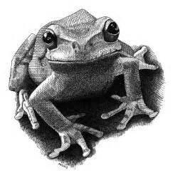 Frog Pen & Ink Drawings