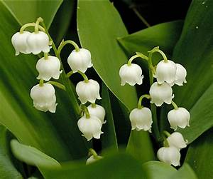 U041c U043e U044f  U0420 U043e U0441 U0441 U0438 U044f  U5580 U79cb U838e U65e5 U8bb0living In Russia  Lily Of The Valley