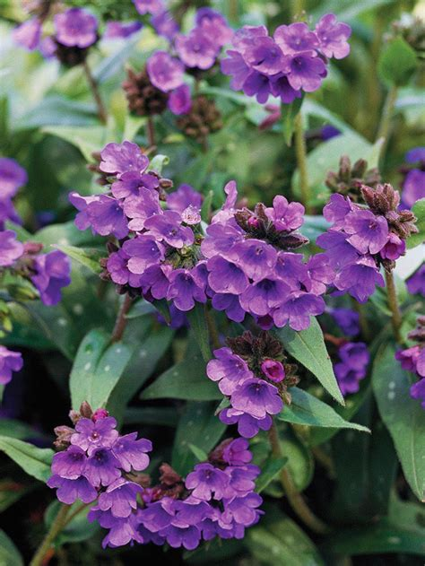 perennial flowers for shade the 10 best perennials for shade