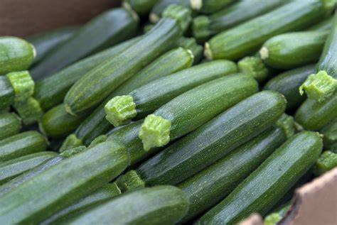 cuisiner les courgettes rondes cuisine estivale 4 astuces pour bien cuisiner la