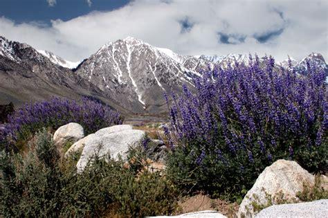 Lavendel » Diese Erde Bevorzugt Er