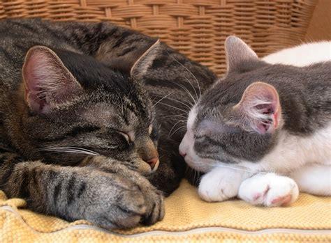 Katzen Halten Ausstattung by Katzen Zusammen Halten Probleme Im Mehrkatzenhaushalt