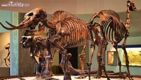 Scheletri Di Dinosauri Esposti Nel Museo, Ci ...