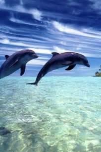 Ocean Animals Dolphins