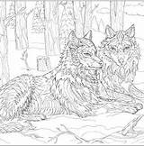Wolves Coloring Wolf Pages Draw Native American Adult Dogs Drawing Drawings Prints Uploaded User Leather sketch template