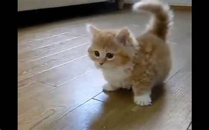 Kitten Cutest Ever Playing Jul Core