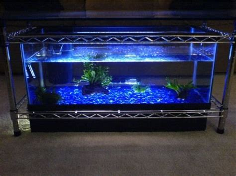 spectacular diy fish tank coffee table  guide