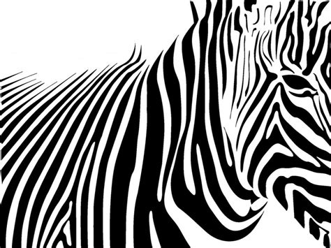Abstract Black And White Animal Drawings by Animals Zebra Black White Lines