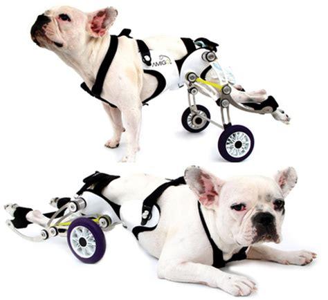 une invention r 233 volutionnaire pour aider les chiens handicap 233 s vid 233 o conso wamiz