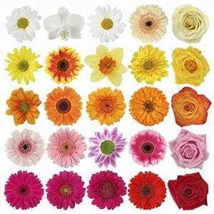 Gelbe Rose Bedeutung : blumensprache welche farbe was bedeuten die farben muttertag blumen 2018 ~ Whattoseeinmadrid.com Haus und Dekorationen