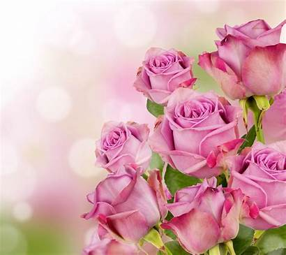 Nature Rose Flower Flowers Mobile Backgrounds Wanita