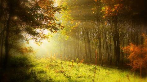 Wallpaper Jpg by Wallpaper Autumn Forest Sun Light Hd Nature 3883
