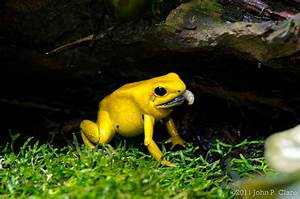 Ecological Niche | Poison Dart Frogs