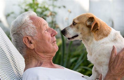 pet adoption programs match older owners  senior dogs