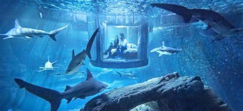 nuit dans un aquarium airbnb passez une nuit dans l aquarium de au milieu de 35 requins