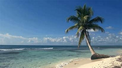 Tropical Beaches Tree Loop Giphy Nature Coconut
