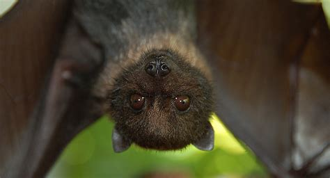all about bats welcome wildlife