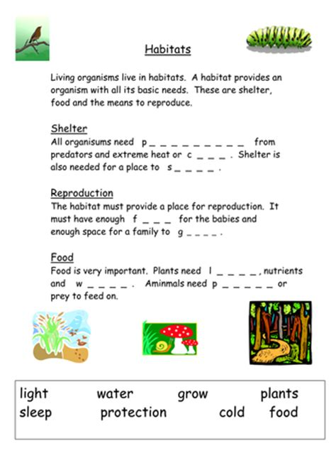habitats starter ks3 by musarat kabir teaching resources