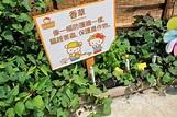 寫我心情: HELLO KITTY低碳有機薈農莊&錦田紅磚屋