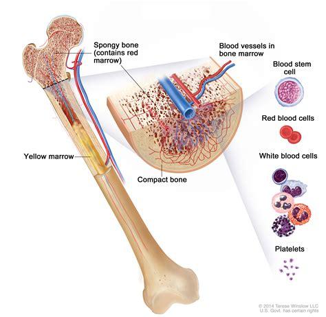of bone bone cancer patient version national cancer institute