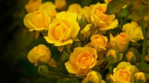 gelbe blumen bedeutung 1000 images about farben neue trends und frische muster entdecken on shabby chic