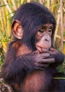 15 best Cute Baby Monkeys images on Pinterest   Monkeys ...