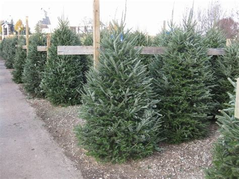 christmas trees sherwood forest