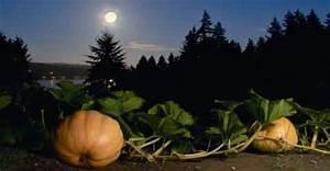 Jardiner Avec La Lune : nature et jardin calendrier ~ Farleysfitness.com Idées de Décoration