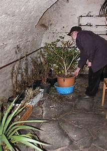 Hortensien überwintern Im Keller : berwinterung von k belpflanzen im keller ~ Lizthompson.info Haus und Dekorationen