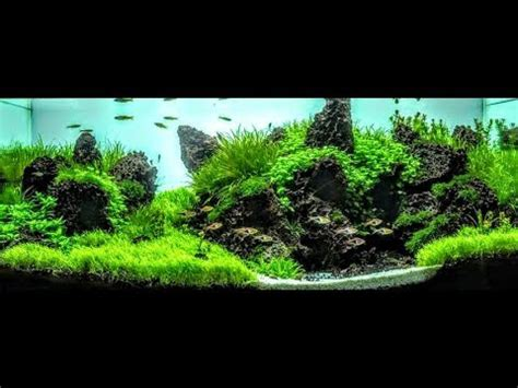How To Make Aquascape by How To Create Depth And Balance Within Your Aquarium