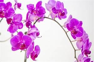 Orchideen Klebrige Blätter : orchideen kleben woran kann 39 s liegen was ist zu tun ~ Whattoseeinmadrid.com Haus und Dekorationen