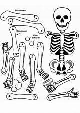 Coloring Anatomy Pages Anatomical Heart Skeleton Human Bones Coloringhome Printable Getdrawings Label Popular Getcolorings Leave sketch template