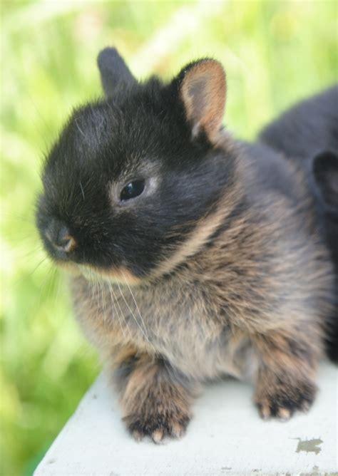 gabbie coniglio nano allevamento coniglio nano sicilia