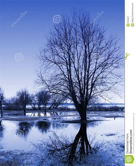Tree Reflections Stock Photography Image 663642