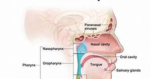 My Voice  Risk Factors  Diagnosis And Treatment Of Primary