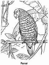 Coloring Parrot Pages Printable Animals Rainforest Parrots Tropical Animal Awesome Planet Earth Birds Drawing Jungle Books Rainforests Adult Children Coloringpages101 sketch template