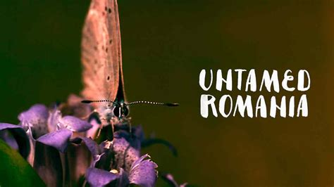 romania untamed netflix