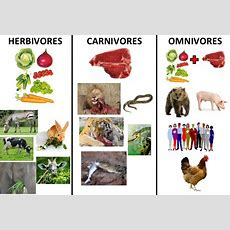 Herbivores, Carnivores And Omnivores  Natural Science #2