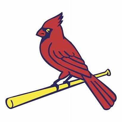 Cardinals Louis St Logos Vector Cardinal Clip