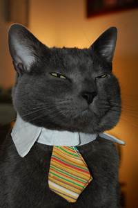 20 Adorable cats wearing ties | Amazing Creatures