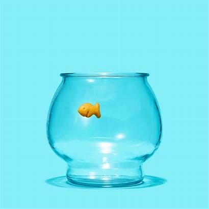 Goldfish Crackers Organic Percent Gifs Times York