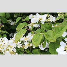 The Best Climbing Plants For Shade  David Domoney