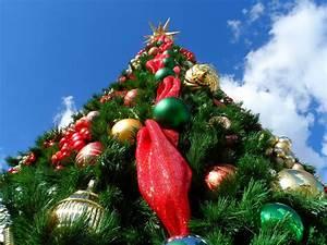 Wann Stellt Man Weihnachtsbaum Auf : warum stellt man einen weihnachtsbaum aufweihnachtsgeschenke suchen und finden ~ Buech-reservation.com Haus und Dekorationen
