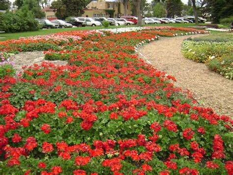 annual flower trial garden fort collins co address