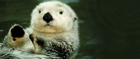 the otter project