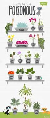 plants poisonous to cats 12 plants that are poisonous to cats infographic