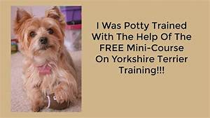 Yorkie potty training problems free mini course on for Dog potty training problems